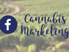 Why is Guidance So Vague for Cannabis Marketing on Facebook?